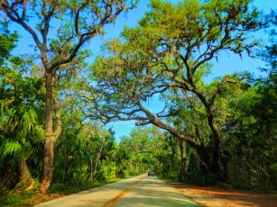 Live Oak and Palm Forest in Tomoka State Park Daytona Beach 1