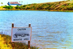 Manatee Sign at Estuary at GTM Research Reserve St Augustine Florida 1