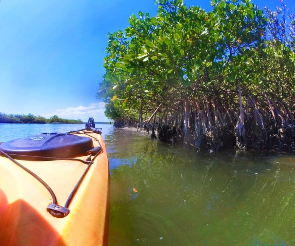 Mangroves when kayaking at GTM Reserve St Augustine 1