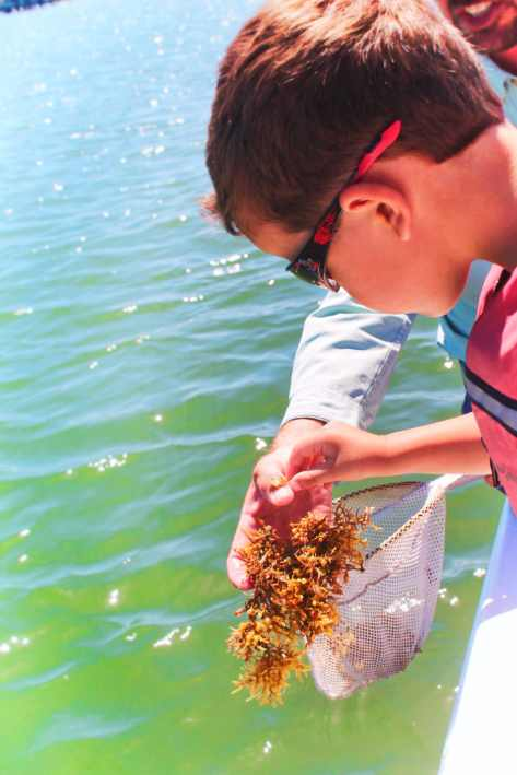 Taylor Family Exploring sargassum seaweed St Augustine Ecotours 1