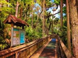 Boardwalk hiking at Blue Spring State Park Daytona Beach 2