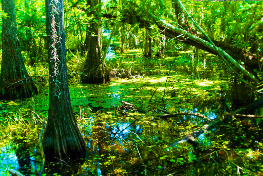 National Preserve Hike Big Cypress