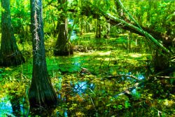 Deep Lake trail Big Cypress National Preserve from Flickr cc Florida Hikes 1