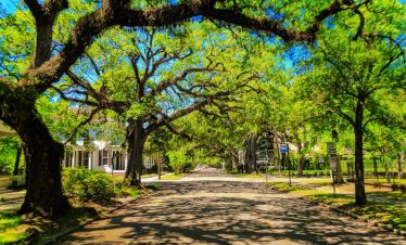 Live Oak canopy street in Church Street East Historic District Mobile Alabama 2