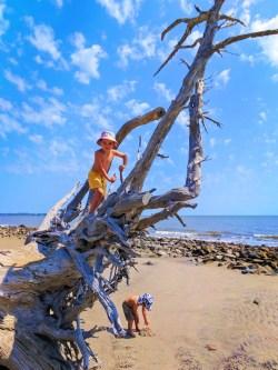 Taylor Family at Driftwood Beach Jekyll Island Golden Isles 7