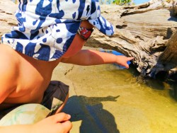 Taylor Family exploring Driftwood Beach tidepools Jekyll Island Golden Isles 4