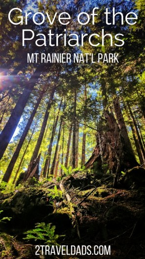 Hiking the old growth forest of Mt Rainier National Park, the Grove of the Patriarchs is a beautiful retreat from the crowds higher up on the mountain. Opportunities for learning and relaxation abound among these towering trees. 2traveldads.com