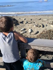 Elephant seal colony San Simeon Cambria 2