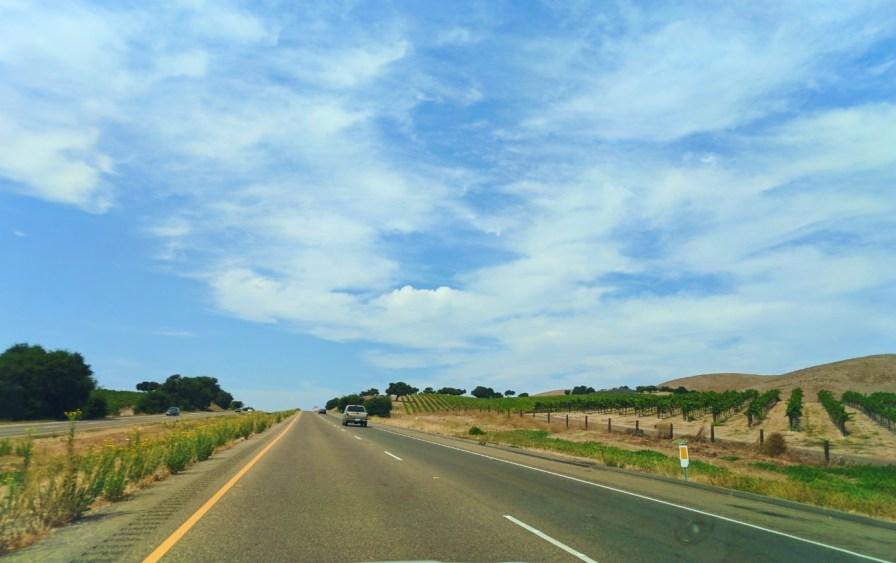 Vineyards in Santa Maria Valley California 1