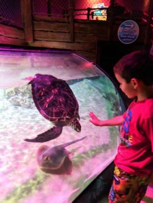Taylor Family and sea turtle at SEA LIFE Arizona Tempe 1