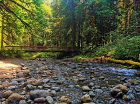 Foot bridge at Marymere Falls hiking in Olympic National Park 1