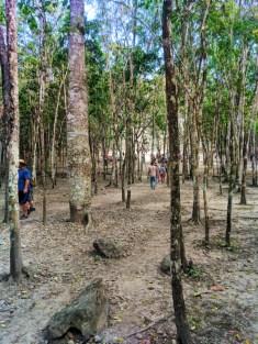 Hiking to the great pyramid at the Coba Mayan Ruins Yucatan 1
