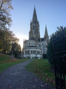 Saint Fin Barre's Cathedral - Cork