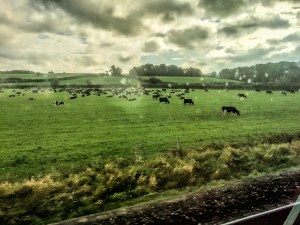 On the train to Dublin