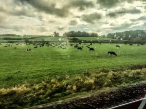 On the train to Dublin
