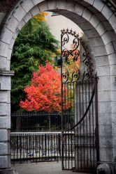 Autumn colors in downtown Cork