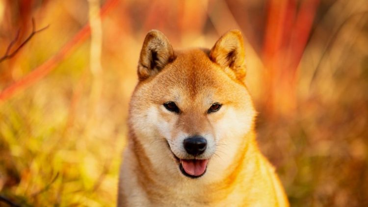 Hackers Start Using Dogecoin To Get Into Users' Computers