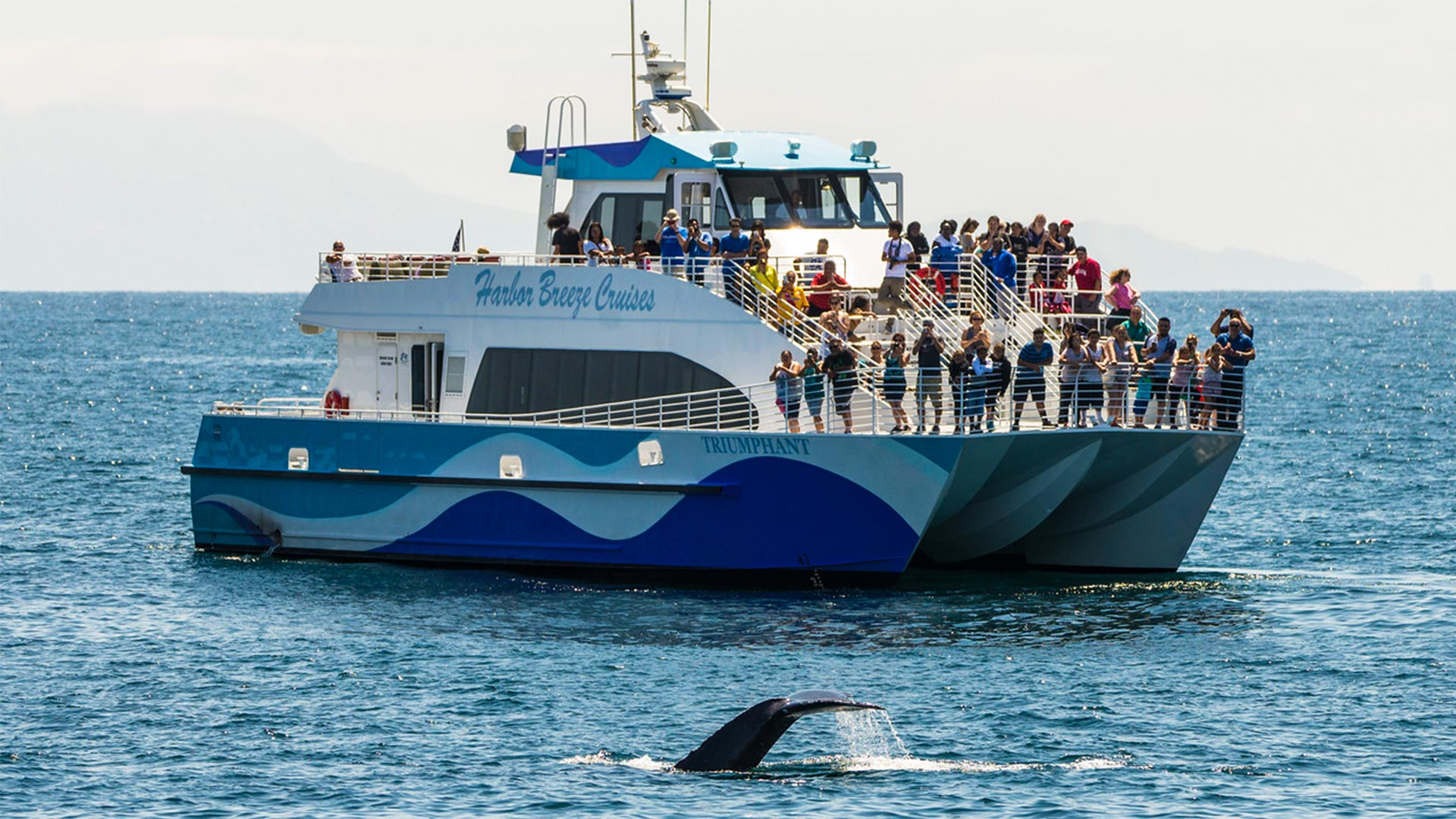 Whale Watching In Long Beach Amp Los Angeles CA Harbor Breeze