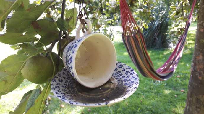 kop-en-schotel hangend in fruitboom