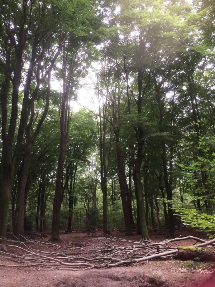 Open plek in het beukenbos met takken op de grond