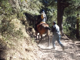 Horse ride up the mountain. Hope the tail holds out.