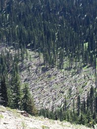 Lots of dead trees down in the Middle Fork Teanaway valley.