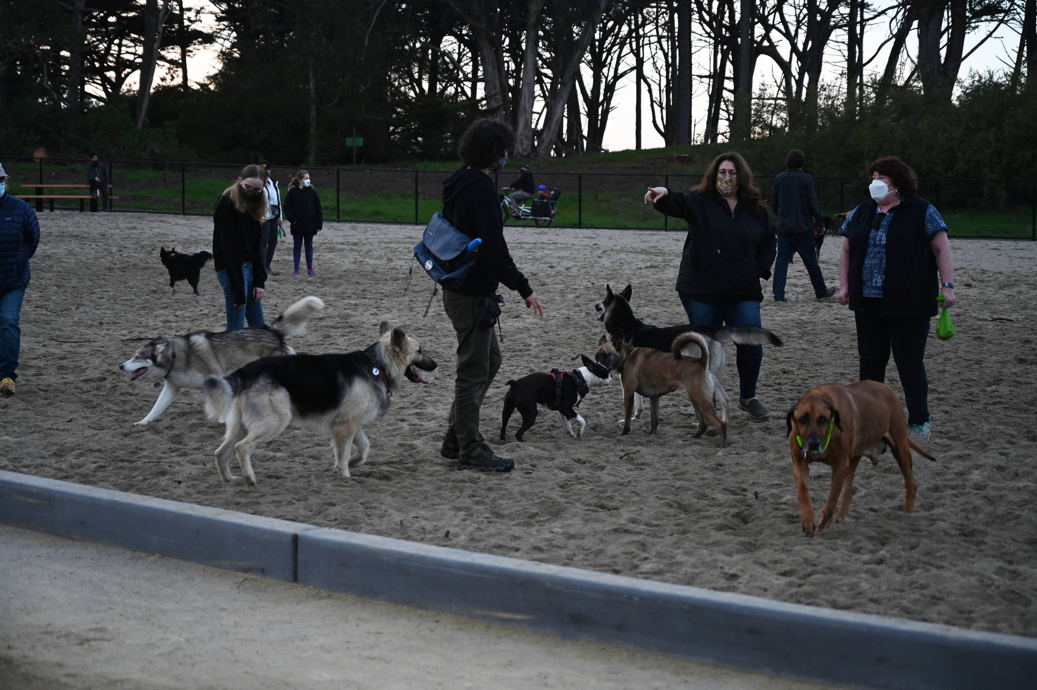 Dogs and their humans gathered Saturday at the newly renovated dog park in Golden Gate Park. (Samantha Laurey/Special to SF Examiner)