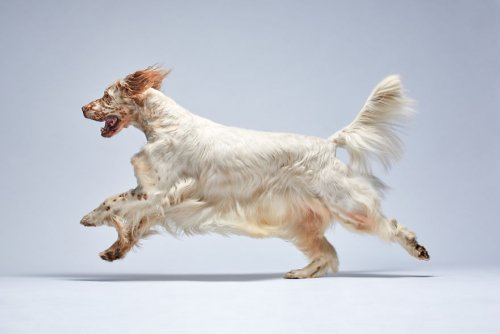 Каждая собака -индивидуальность,в портретах фотографа Александра Хохлова