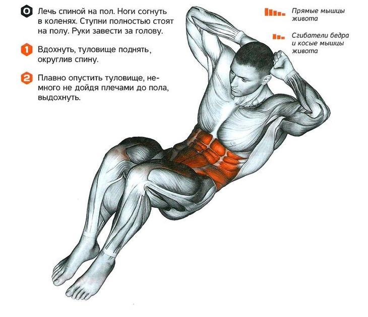 власть так упражнения на мышцы пресса в картинках они могут
