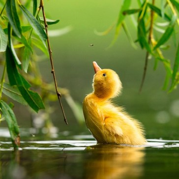 Slideshow: 2021 Bird Photographer of the Year finalists