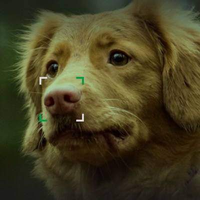 NOSEiD app helps reunite lost dogs with their owners using photos of their noses