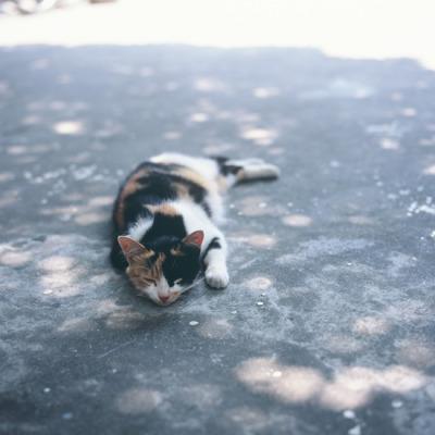 meow meow me-owme-ow