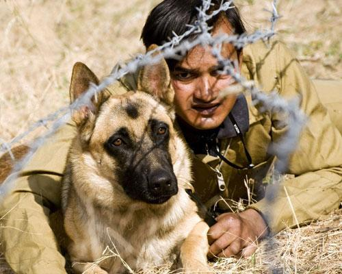 "The phrase ""man's best friend"" has new meaning when you consider these brave canines. We highlight some of the bravest dogs in history, from a black poodle who fought in the Napoleonic Wars to the Belgian Malinois involved in the raid on Osama bin Laden's compound. 11 bravest dogs in history"