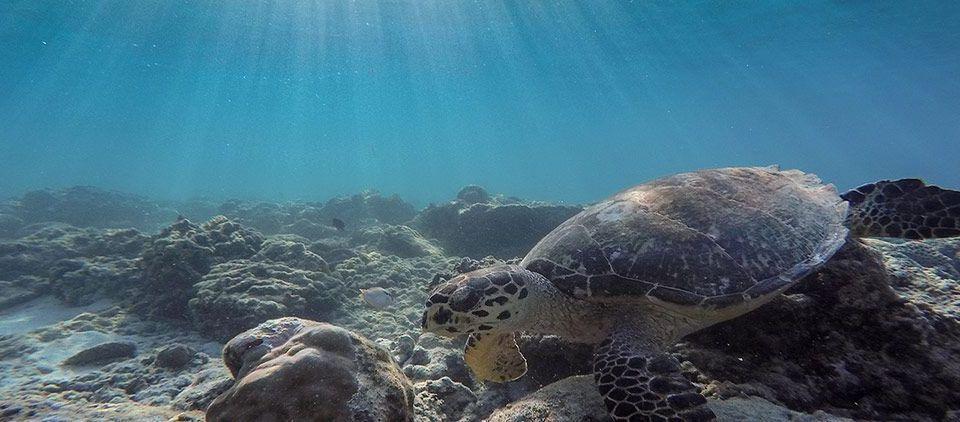 Tortugas Indonesia: Viajes de Aventura, Viajes Alternativos, Turismo Responsable, Mochilero, Viajar en Grupo, Viajar Sola. 3000KM