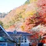 高尾山の紅葉の見頃はいつ?秋のおすすめルートと混雑状況