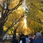 神宮外苑の紅葉を見に行ってきた!見所や銀杏並木のカフェ、ライトアップ