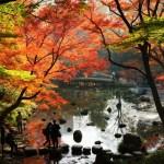 小石川後楽園の紅葉の見ごろや混雑は?デートで行く価値ある?