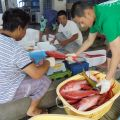 【東洋のガラパゴス小笠原にお試し移住】漁師の暮らしに密着体験。東京都小笠原(父島&母島)の漁業就業体験が、2018/10/5〜17に開催されます