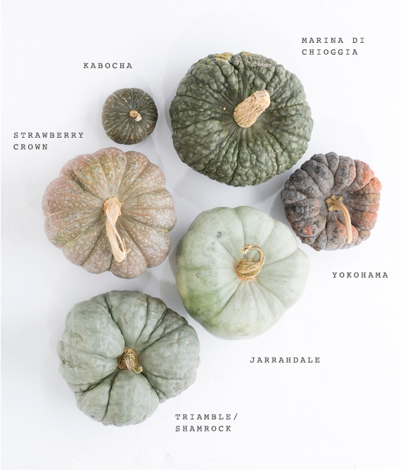 green-heirloom-pumpkins-fall-decor-1