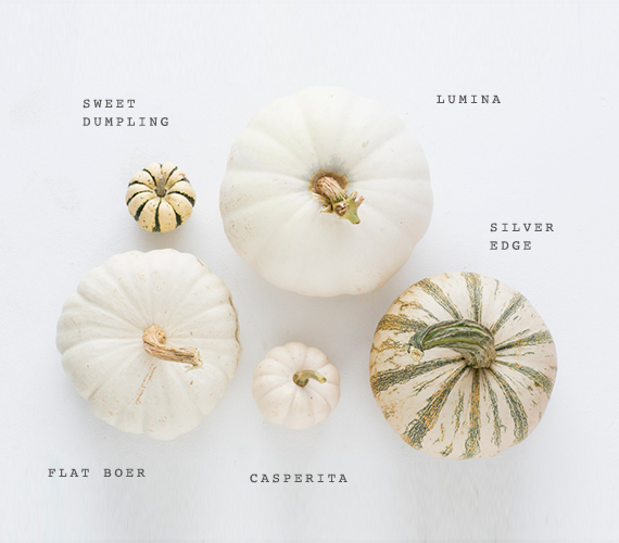 white-heirloom-pumpkins-fall-decor-1