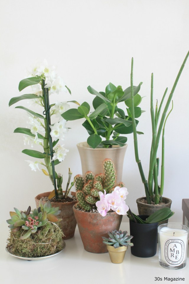 A Plant Shelfie in the Bedroom