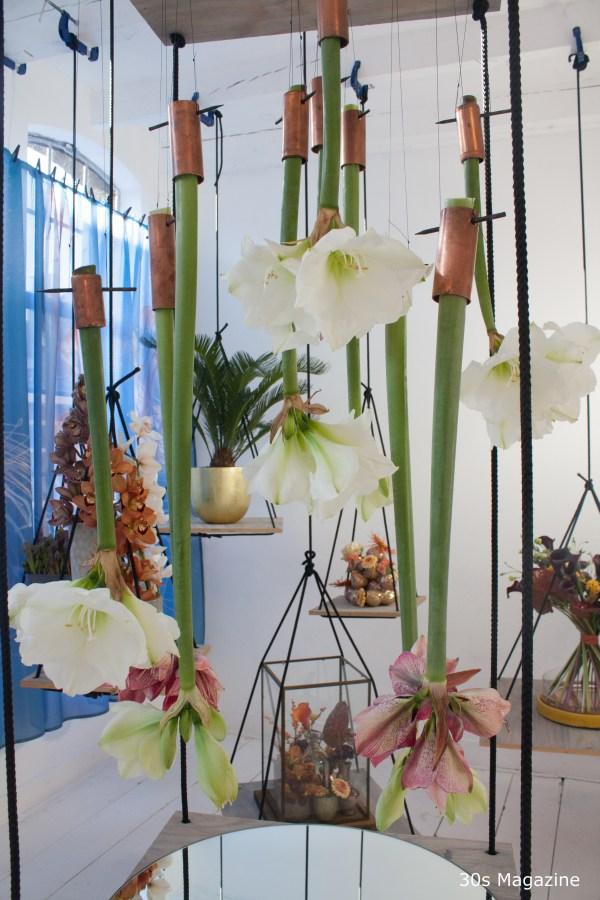 amaryllis hanging