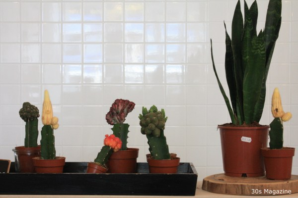 plants at KEET Rotterdam