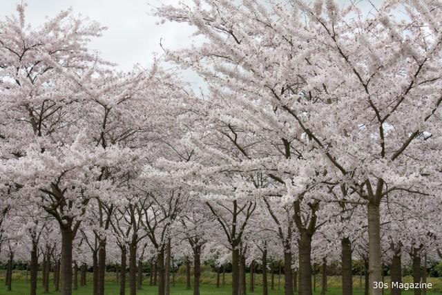 Weekendtip: Blossom festival in Amsterdam
