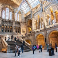 4 Reasons to visit the Natural History Museum of London
