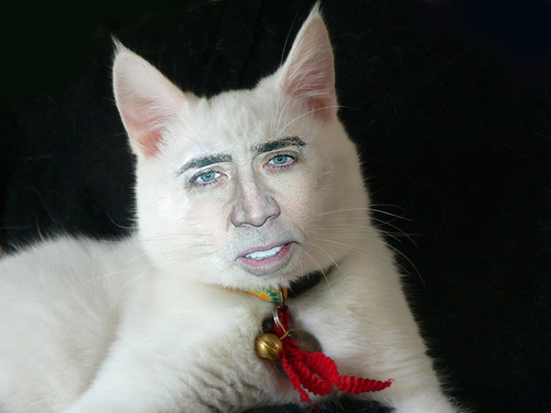 Tennants-hair: NICOLAS CAGE'S FACE ON CATS IS MY