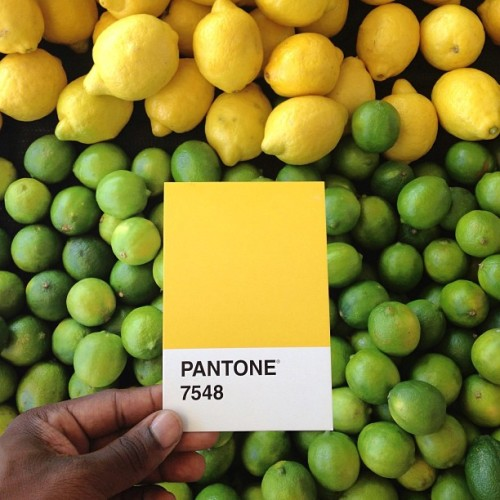 🍋🍋🍋🍋🍋- Pantone 7548 / Currently buying tons of lemons to make Lemonade and mix with Beer to make Summer Shandy! 🍋🍺😊 P.S. if you want people to look at you, just color match in the grocery store… #thepantoneproject