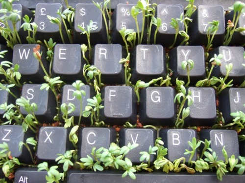 Don't let weeds grow<br /> on your keyboard.<br /> Use the keys to write down<br /> your thoughts and dreams.<br /> Without dreams, life becomes<br /> black and white.<br /> Let color into your life.