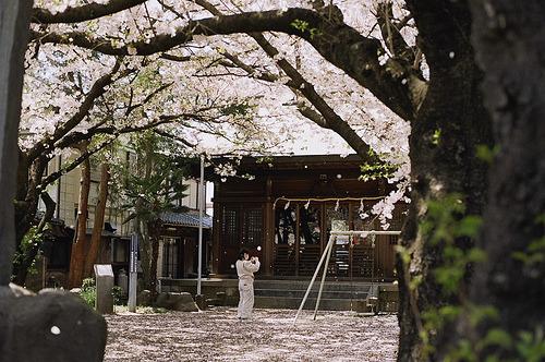 Sakura, as in Japan