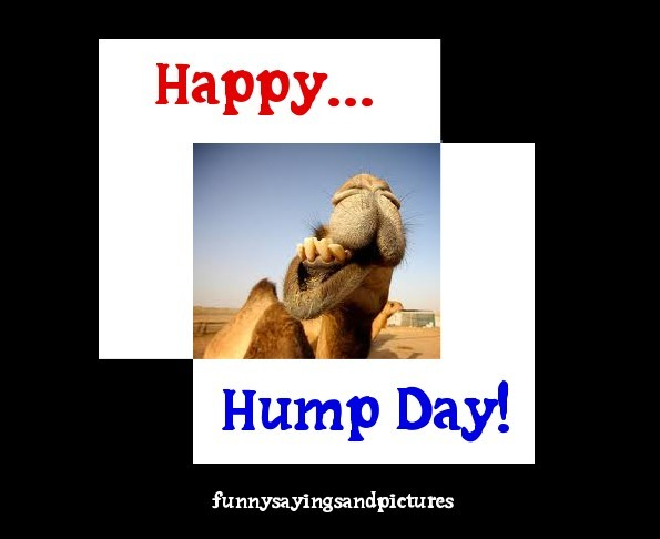 Wednesday Quotes Hump Funny Day